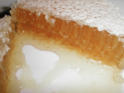 round-section comb honey, fresh from the hive (yum!)