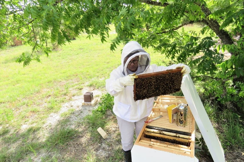 Final Hive Inspection