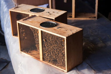 Install Package Bees