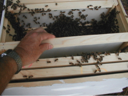 installing package bees in new bee hive