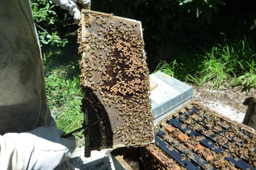 Organic Beekeeping Certification Standards