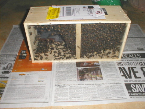 packaged bees 2