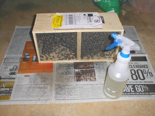 packaged bees 3