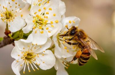 Bee Pollen Research
